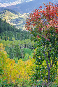 Autumn in Provo Canyon 01