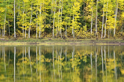 Aspen Reflection at Payson Lakes