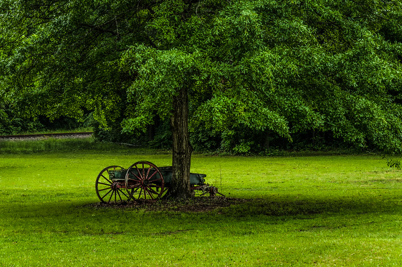Beneath The Old Oak Tree