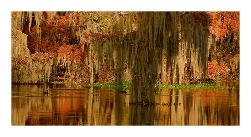 Blackshears Swamp