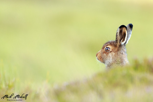 Scanning the Heather