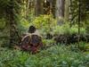 Redwood Forest Scene