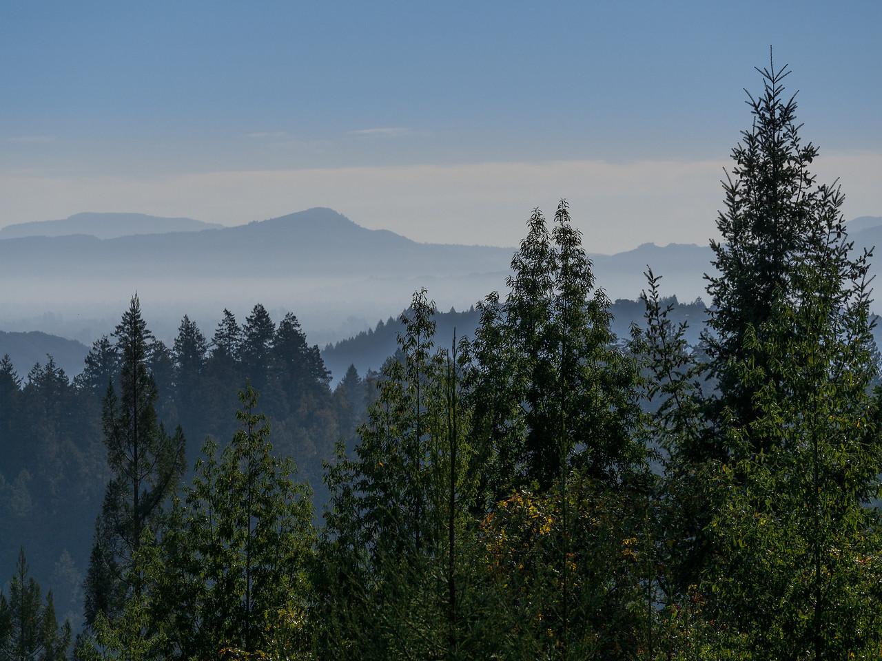 California Mountains in Fog