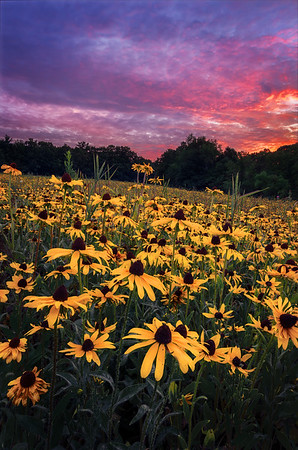 Wildflowers Under a Fiery Sky