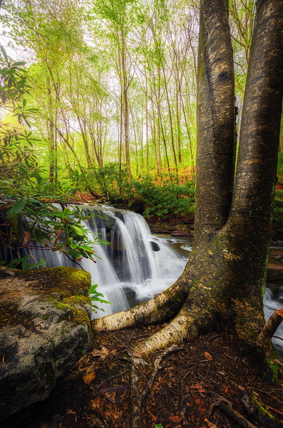 Nature's Serenity
