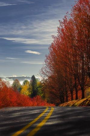 The Road Through Kentuck Knob