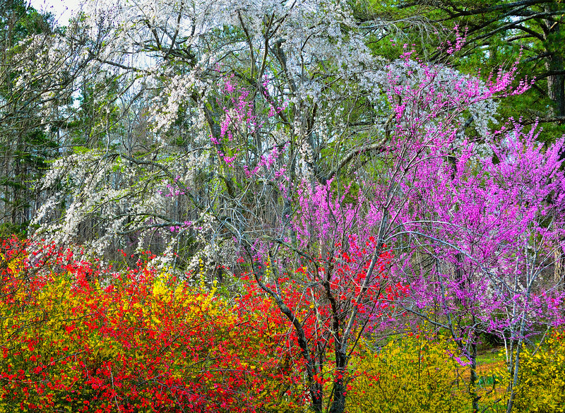 Colors Of NC Spring_