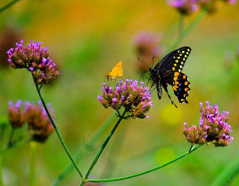 Flutterings_