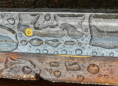 Park Bench in Rain, Portland, 2021
