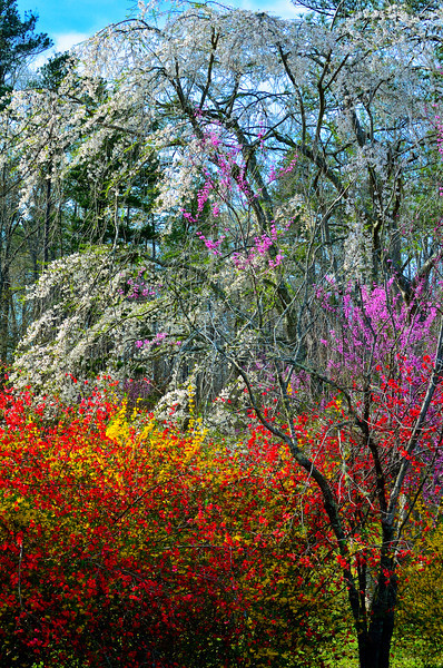 Colors Of North Carolina Spring