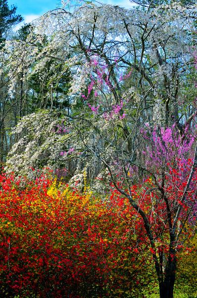 Colors Of North Carolina Spring