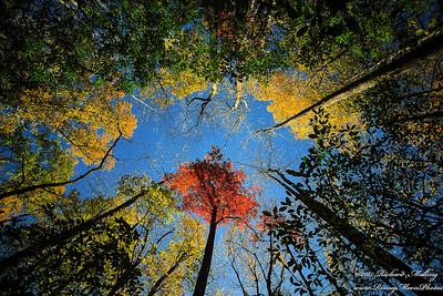 Blue Ridge Fall NC 2015