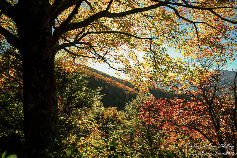 Fall On The BlueRidge Parkway 2014