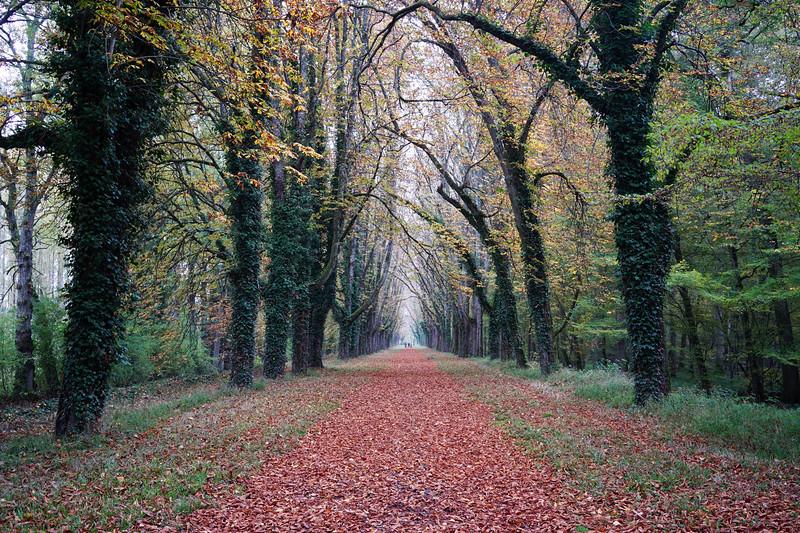 A Well Groomed Path