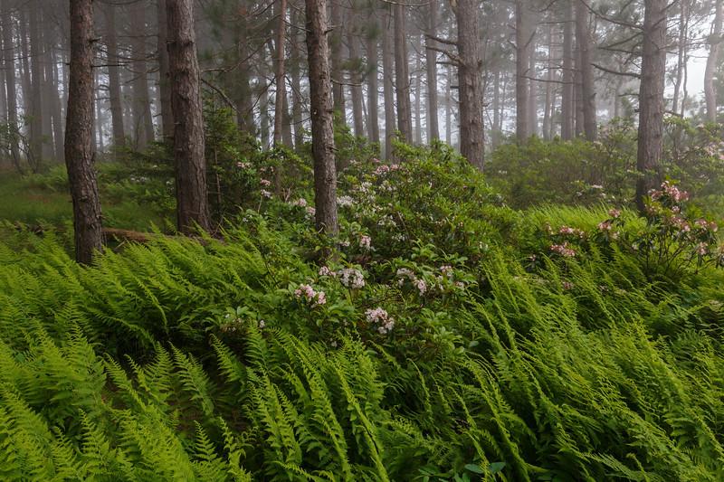 Ferns and Laurel 8853