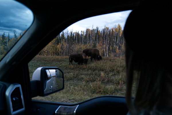 Roadside Wild