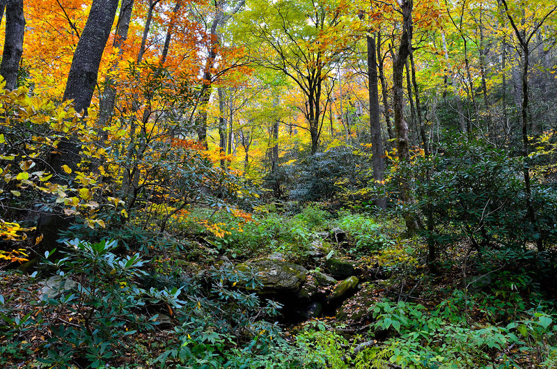 The Colors Of Fall In North Carolina
