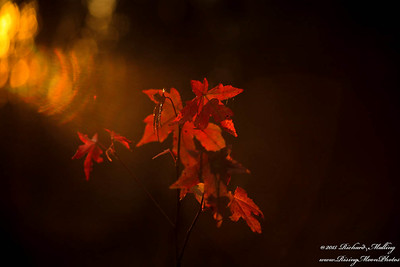 December Fall Colors 2015