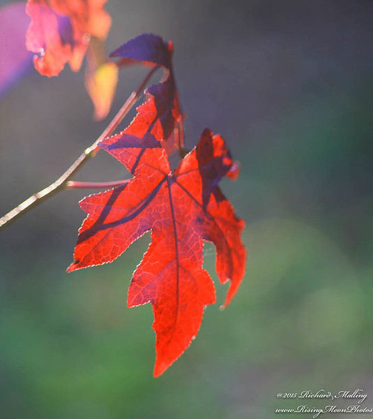 NC Late Fall Color 2015