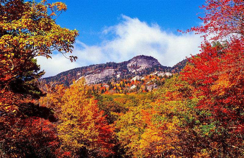 North Carolina Mountains Fall Color  Looking up at Grandfather Mountain