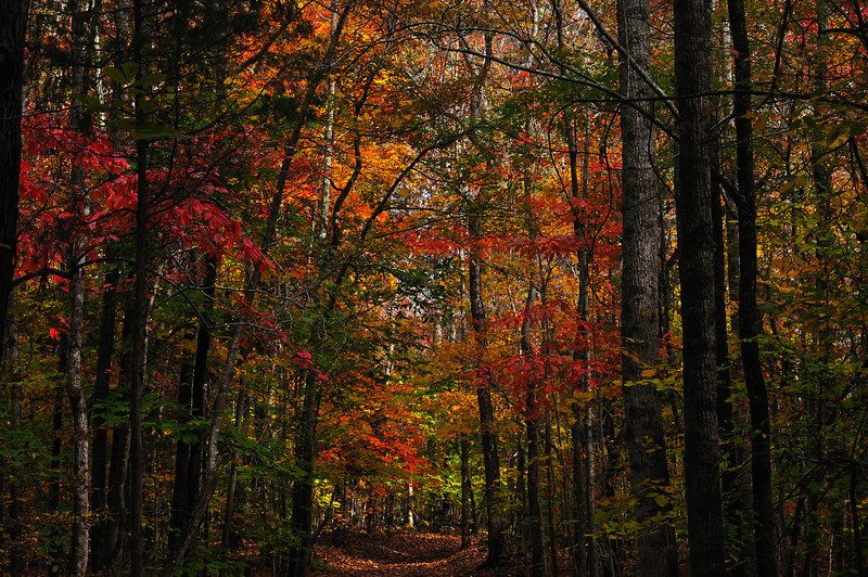 Fall At The Eno 2011