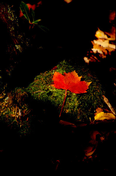 Leaf Capture
