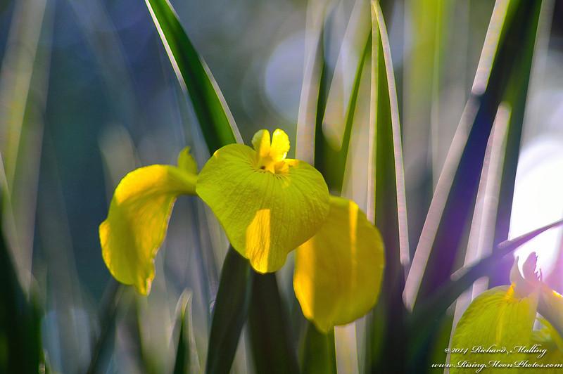 Shimmering Flowers