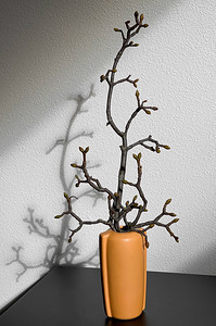 Fallen Maple Branch in Apricot Vase, Portland, 2021