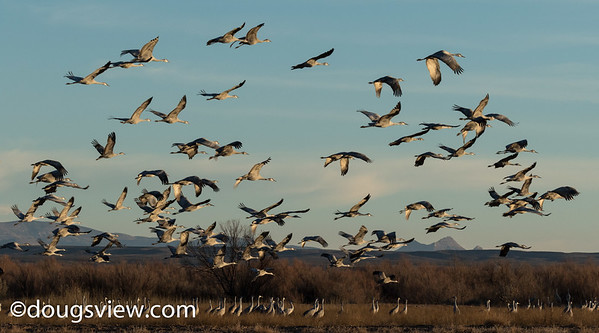 Ladd S. Gordon Waterfowl Complex, NM