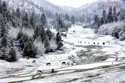 Spring Snow on the Ranch