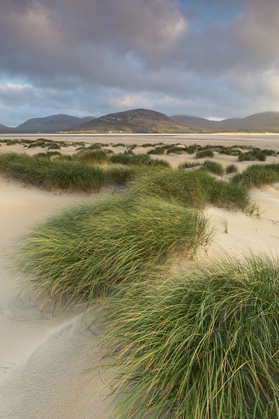 Early evening sunshine reaches the beautiful grass on the dunes at Luskentyre beach, Isle of Harris, Outer Hebrides, Scotland