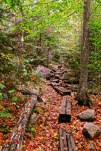 Autumn Hiking Path
