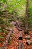Autumn Hiking Path
