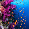 Soft Coral Wall