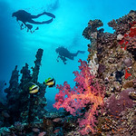 Divers Over a Coral Reef