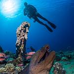 Diver over an Eel