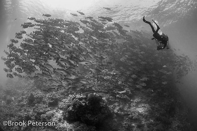 Diver and Schooling Fish