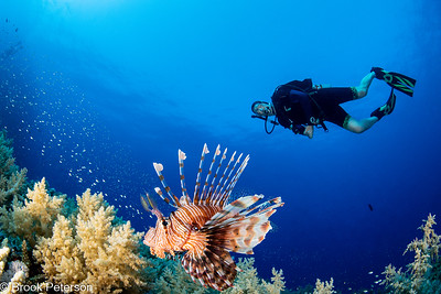 Lionfish with Diver