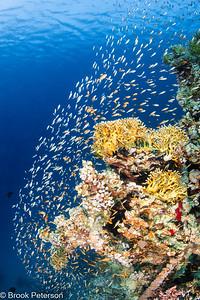 Reef Fish Heaven