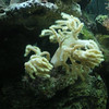 Green Tree Coral