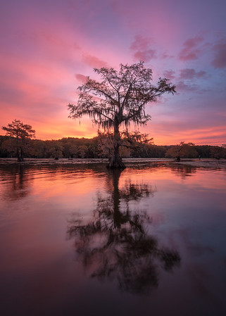 Sunrise in the swamps