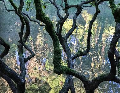 Reflections, Japanese Garden, Portland, 2019