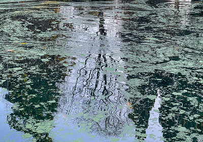 Tree Reflections with Algae, Laurelhurst Park, Portland, 2020