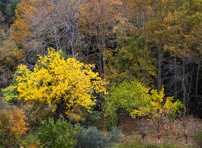 Fall Splendor in Tannourine Tahta - L014
