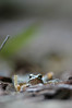Eye-Level Wood Frog