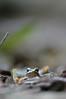 Eye-Level Wood Frog