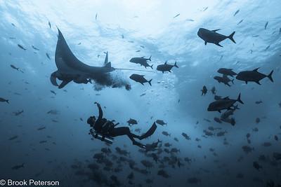 Unfortunate Diver
