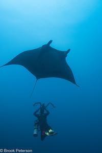Diver Photographing Manta Ray