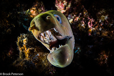 Moray Portrait