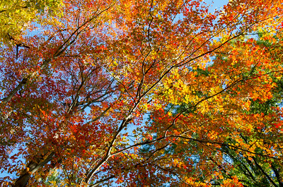 Fall Leaves - Ringwood, New Jersey